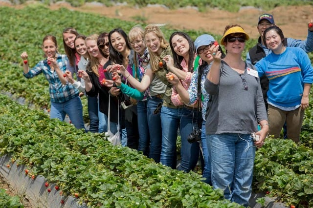 CA Strawberry Farm Tour Bloggers