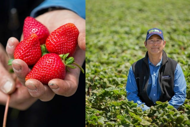 CA Strawberry Farmer Rod Koda