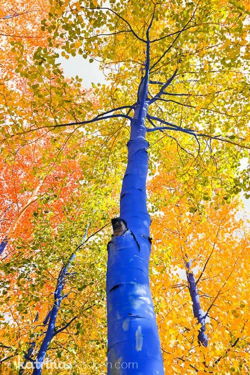 Breckenridge Colorado- A Photo Tour